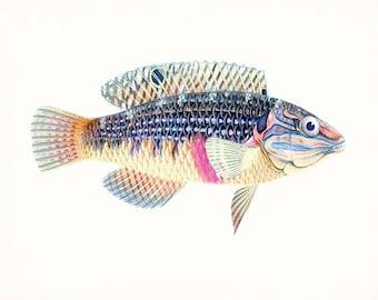 A Natural History of Fish Coastal Decor Giclee Print No. 2
