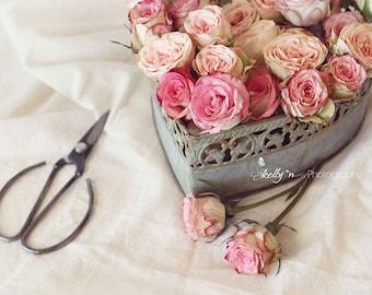 Rosemance- Flower Photography, Pink Roses Photo, Romantic Art, Valentines Day, Floral Art, Still Life Photo, 8x10 Fine Art Print