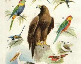 Vintage Antique 1950s Bird bookplate original lithograph art print illustration 3