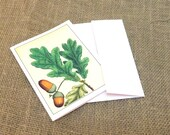 Oak Note Cards, Oak Acorn Card, Woodland Stationary, Set of 8, Nature Notecards, Botanical notecard, Personalized Notecards, Thank you cards