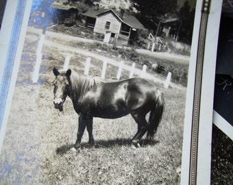 Vintage Snapshot Photo - Black Horse on Farm