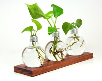 Triple Light Bulb Bud Vases with Wood Holder - Modern Home Decor, Glass Flower Bud Vases, Modern Table Centerpiece (Plants Not Included)