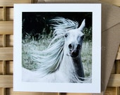 FLARE, Arabian horse action portrait, Art Card, Horse Greeting card, Equine photography.