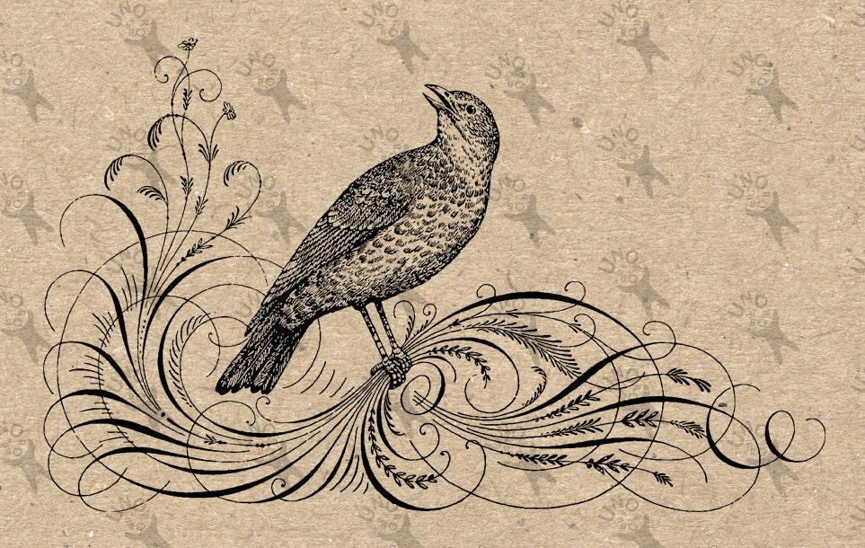 Vintage Image Bird Calligraphy Clip Art Design Transfer