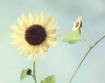 Sunflower Photograph, Flower Photography, Blue and Yellow Wall Decor, French Country Bathroom Art, Turquoise Artwork, Floral Art Print