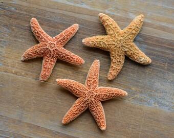 2 Pcs Real dried Miniature Sugar Starfish Small Star Fish Craft Pendant Charm Jewelry Supplies (AL009)