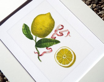 Botanical Lemon Naturalist Study 4 Archival Print