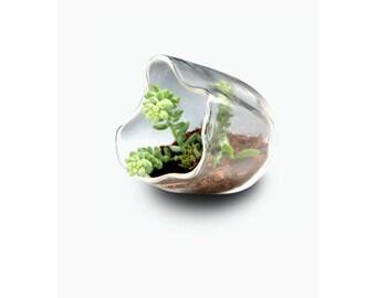 Terrarium, Glass Terrarium, Recycled Terrarium, Organic Succulent Garden, Blown Glass Terrarium, Table Terrarium