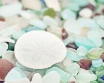 Beach Glass Photography - Sea Glass Photograph - Sand Dollar Photograph - Glass - Fine Art Photography Print - Green Blue Brown Home Decor