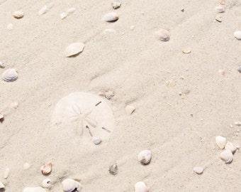 Sand Dollar Photography - Beach Photograph - Florida - Sand Dollar Photo - Minimalist Photo - Fine Art Print - Neutral Beach Decor