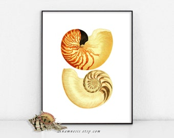 NAUTILUS SEA SHELLS - digital image download - printable antique ocean illustration for prints, totes, bags, cards, tags etc. - home decor