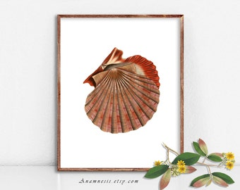 ORANGE SEA SHELL - Instant Download Print - a retooled antique shell illustration to frame or transfer to totes, pillows, cards, tags etc.
