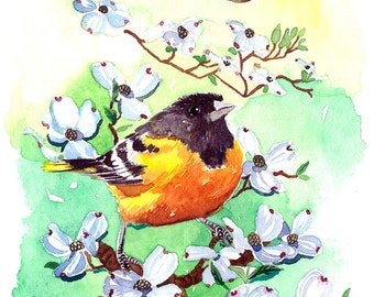 ART PRINT - Baltimore oriole in spring