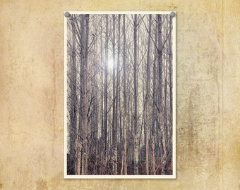 Forest Photograph Trees Blue Cold Winter Minimal Art Print