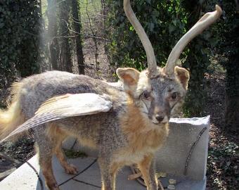 Rare exotic fantasy taxidermy mephoxtophales rogue taxidermy fox chimera