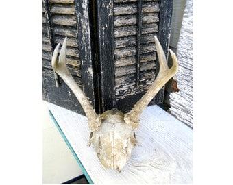 Vintage 1940s 6 Point 3 x 3 Deer Antler Skull Cap Attatched Mount Cabin Lodge Folk Art Prairie Sculpture Rustic Primitive Wall Decor