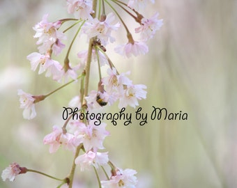 Nature's Beauty - Photography by Maria