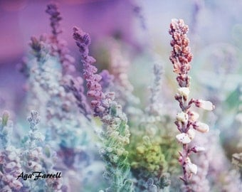 Nature Print, Purple Wall Decor, Heather Photography Print, Large Wall Art, Botanical Print, Purple Wall Art, Nature Art, Purple Home Decor
