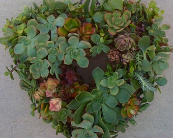 "DIY SUCCULENT WREATH -  55 succulent cuttings, 55 floral pins, 9"" wreath form"