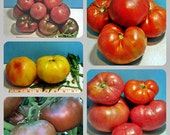 Heirloom Slicer Tomato Seed  Collection Non GMO