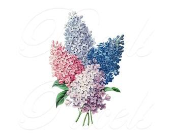 LILACS Digital Image Transfer, Instant Digital Download, vintage shabby flower illustration 212