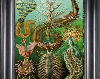 Sea Life PRINT Ernst Haeckel 8X10 Botanical Art 22 Antique Beautiful Colored Aqua Green Sea Ocean Natural Science Coral Tropical Life Decor