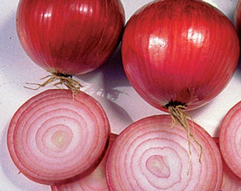 Heirloom Southport Red Globe Onion, High Yielding, Easy to Grow, 25 Seeds