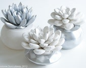 Chrome Set of 3 Succulents in Round Containers, Tabletop, Desktop, Modern, Home and Office Decor