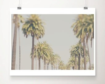palm tree photograph los angeles photograph california photograph palm tree print california print travel photography LA photograph