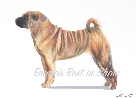 chinese shar pei dog archival fine art print akc best in. Black Bedroom Furniture Sets. Home Design Ideas