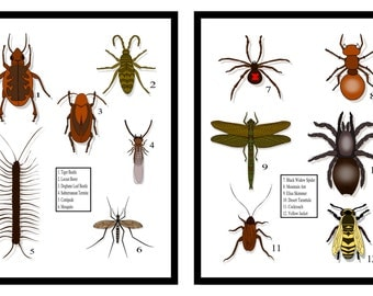 Boys Room Decor, Insect Collection Wall Art, Realistic Oversized Bug Prints, 2 Prints