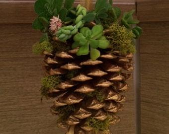 Pinecones & Succulents Oh My!