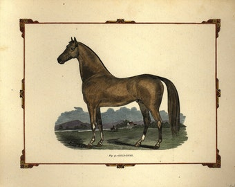Antique Original Hand colored Engraving of Horse - The Gold - Dust  Horse