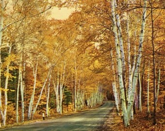 1960s Unused Postcard featuring the Shelburne Memorial Highway through the White Mountains of New Hampshire.
