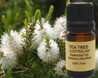 Tea Tree Essential Oil (AAA Australian) 5 ml, 10 ml or 15 ml