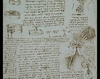 Anatomy - Study - Human Details  - by Leonardo DaVinci