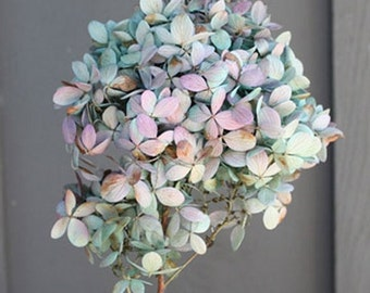 Preserved Hydrangea Stems Preserved Flowers, Preserved Wedding Flowers, Simply Beautiful !