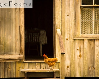 Chicken on the stoop photograph 6x9 size 8x12 print 11x17 photography