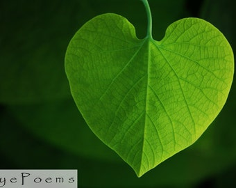 For the love of nature photograph 6x9 photo size 8x12 print 11x17 heart photography