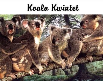 Koala Fridge Magnet 7cm by 4.5cm, Koal Kwintet
