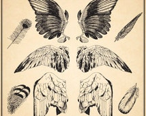 ANGEL / BIRDS Wings & Feathers Clipart - Digital Clip Art Graphics for Personal or Commercial Use
