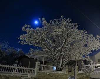 Moonlight Snow (11) - Digital Photo for Download - A Snow scene on a Beautiful Moonlight night - Jerusalem mountains. Nature Scene photo