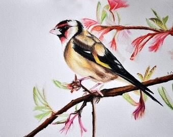 Original Goldfinch Drawing, Realistic Colored Pencil Bird Art 5.5x8 inch
