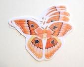 Orange Moth / Butterfly Sticker