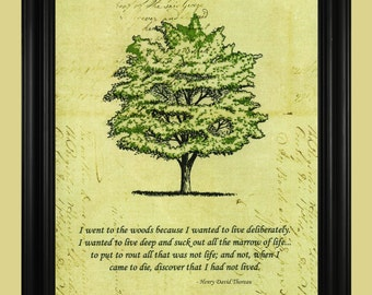 Henry David Thoreau Quote, Green Tree Art Drawing, Beautiful Nature Poem, I Went To The Woods Illustration - 8 x 10