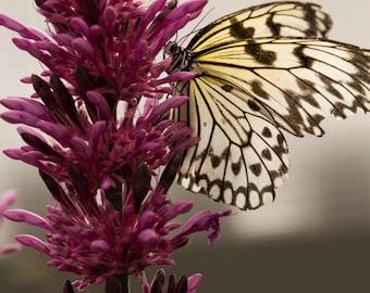 Butterfly On Purple Flower photograph