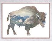 Buffalo - Faunascapes Ltd. Ed. Art Print