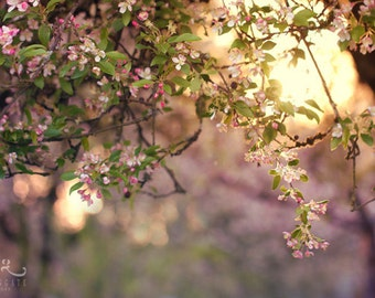 Pink Sunlight - Photo Print, flower photography, spring, botanical, summer, tree blossoms sunshine