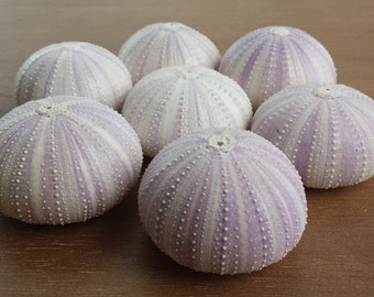 Sea Urchins, Sea Urchin, Purple Sea Urchin, Beach Decor, Sea Urchin Shell, Seashells, Urchin