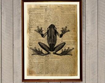 Animal poster Frog print Dictionary art  Cabin decor WA526
